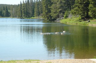 Click image for larger version  Name:09:06:23 Cypress Hills IPP - 07.jpg Views:634 Size:91.4 KB ID:799