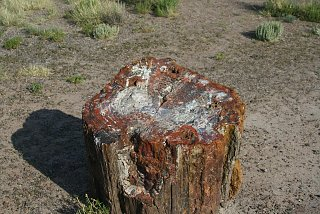 Click image for larger version  Name:PETRIFIED FOREST STUMP resize.jpg Views:7383 Size:290.6 KB ID:863