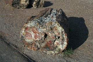 Click image for larger version  Name:PETRIFIED FOREST WOOD-1 resize.jpg Views:7422 Size:287.6 KB ID:864